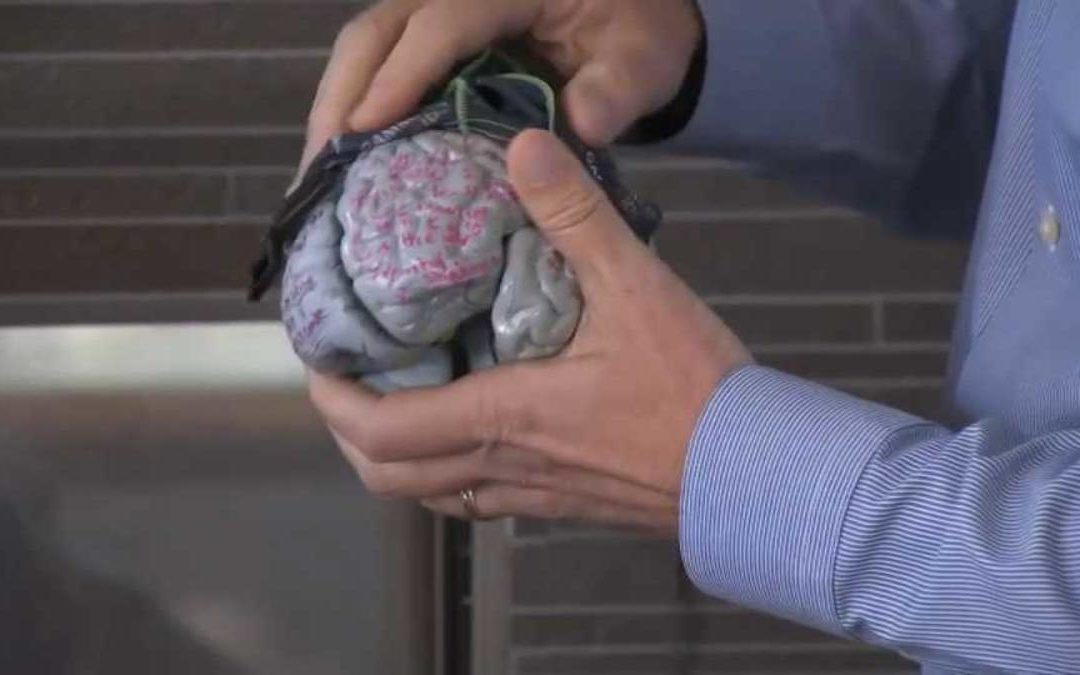 University of San Francisco Professor Discovers Breakthrough in Detecting Autism