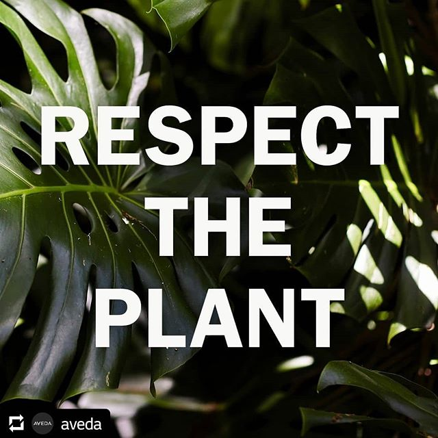 Everything beautiful begins with plants. That's what our founder Horst believed, and it's still true today. Plants do more than brighten our days, feed our families and provide shelter for pollinators, insects and animals — they also power your favorite Aveda products! So give them some  today … and every day. #knowwhatweremadeof